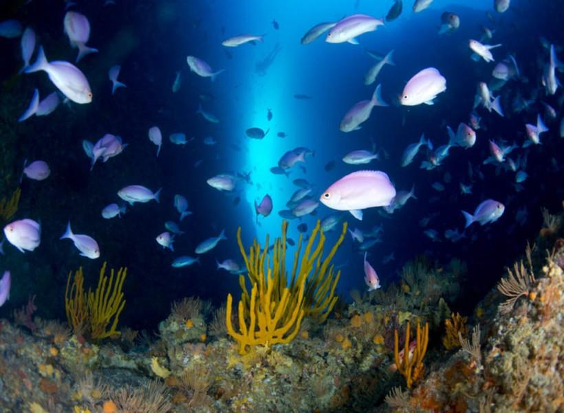 Dive Tutukaka, New Zealand
