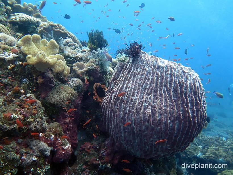 Coral garden at Gili Selang, Bali.