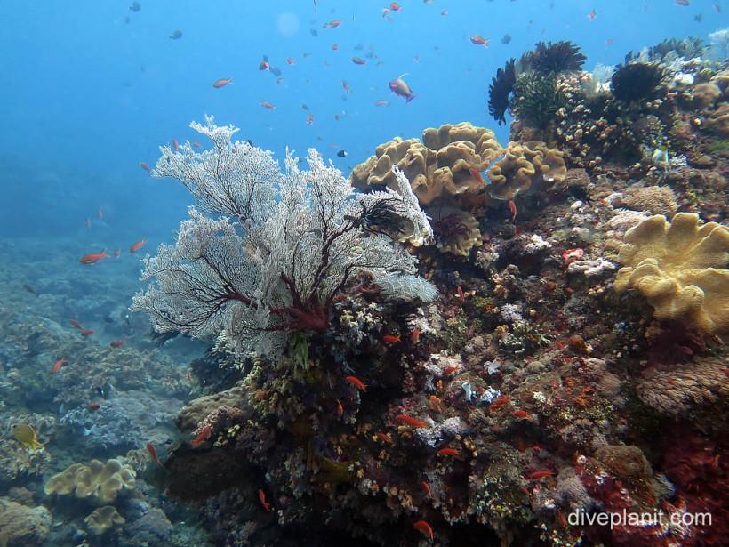 Coral gardens at Gili Selang, Bali.