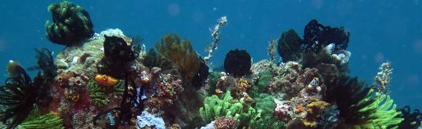 Bangka Island, Sulawesi Indonesia