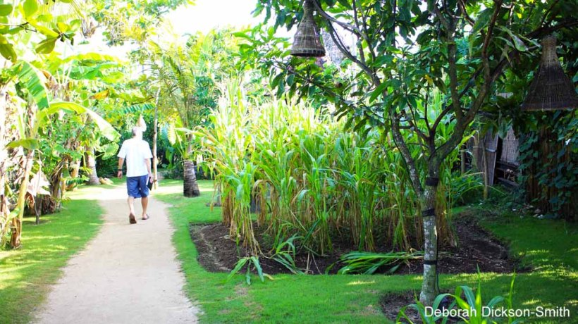 Vegetable garden at Komune Resort and Beach Club